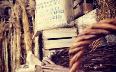 Exposition de blés anciens