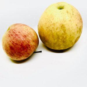pommes chanteclerc bio